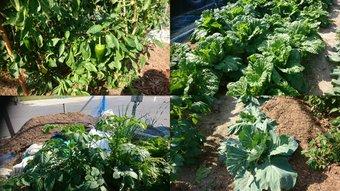 10月の野菜画像