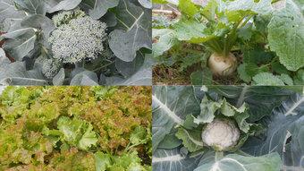 12月の野菜画像